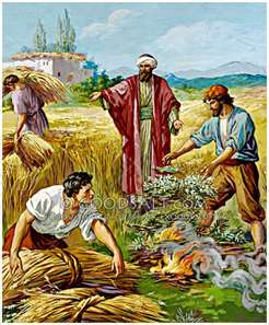 Parable of the Weeds and Wheat